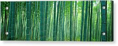 Bamboo Forest, Sagano, Kyoto, Japan Acrylic Print by Panoramic Images