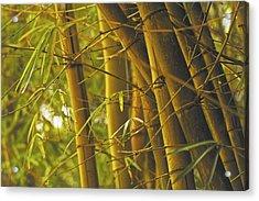 Bamboo Gold Acrylic Print