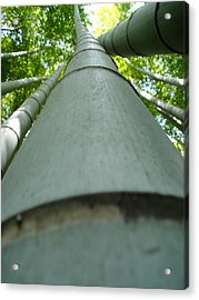 Bamboo Grove In Morning Acrylic Print by Larry Knipfing
