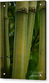 Acrylic Print featuring the photograph Bamboo II by Robert Meanor