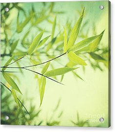 Bamboo In The Sun Acrylic Print