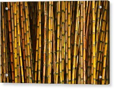 Bamboo Acrylic Print by Jacqui Collett