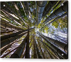 Bamboo Jungle Acrylic Print