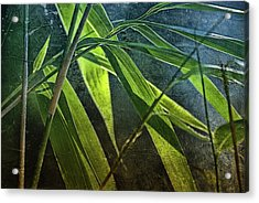 Bamboo-lights Acrylic Print