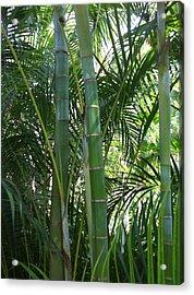 Bamboo Lookout Acrylic Print