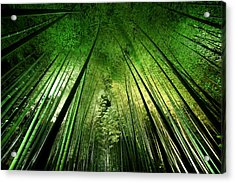 Bamboo Night Acrylic Print by Takeshi Marumoto