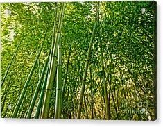 Bamboo Acrylic Print by Nur Roy