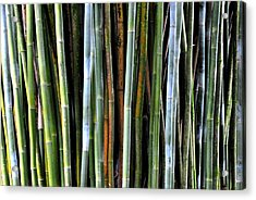 Acrylic Print featuring the photograph Bamboo Rainbow by Jodi Terracina