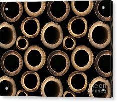 Bamboo Rings Acrylic Print by Bedros Awak