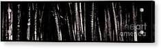Bamboo Acrylic Print by Ron Smith