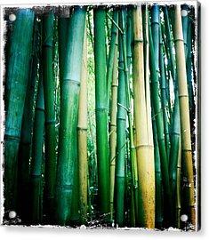 Bamboo Acrylic Print by Sarah Coppola