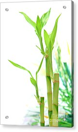 Bamboo Stems And Leaves Acrylic Print by Olivier Le Queinec