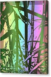 Bamboo Study 8 Acrylic Print