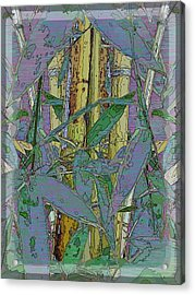 Bamboo Study 9 Acrylic Print by Tim Allen
