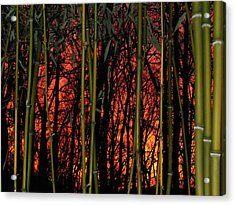 Bamboo Sunset Acrylic Print by Sharon Costa