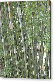 Bamboo Acrylic Print by To-Tam Gerwe