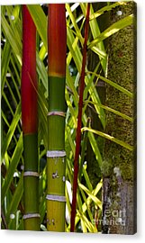 Bamboo Too All Profits Go To Hospice Of The Calumet Area Acrylic Print