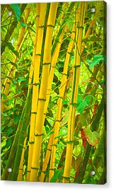 Bamboo Trees Acrylic Print by Art Brown