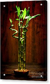 Bambooesque  Acrylic Print by Olivier Le Queinec