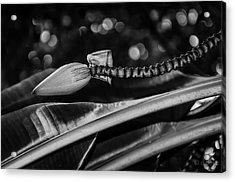 Banana Bokeh Acrylic Print by Diana Boyd