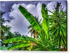 Banana Fan Acrylic Print by William Reek