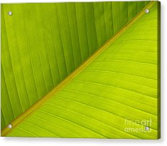 Banana Leaf Diagonal Pattern Close-up Acrylic Print by Anna Lisa Yoder