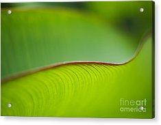 Banana Leaf Macro Acrylic Print