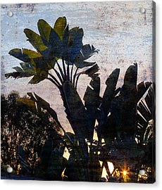 Banana Palms Acrylic Print