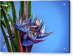 Banana Tree Daylight 3 Acrylic Print