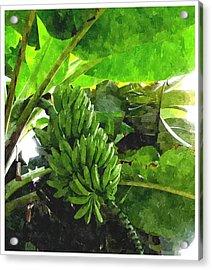 Banana Trees Acrylic Print by Lanjee Chee