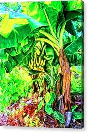 Bananas In Lahaina Maui Acrylic Print