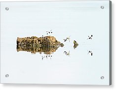 Banded Groundling Dragonfly Acrylic Print