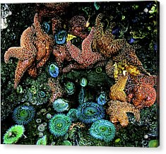 Bandon Beach Oregon Pacific Tidal Pool Acrylic Print