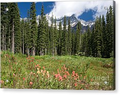 Acrylic Print featuring the photograph Banff Wildflowers by Chris Scroggins