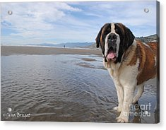 Banjo At The Beach In Carpenteria California  Acrylic Print by Gina Braget
