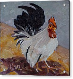 Acrylic Print featuring the painting Bantam Rooster by Pattie Wall