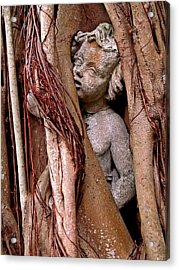 Banyan Boy Close Up Acrylic Print