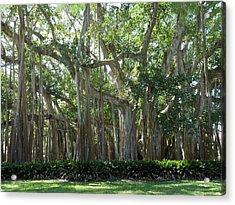 Banyan Tree Acrylic Print by Kay Gilley