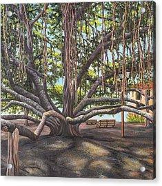 Banyan Tree Lahaina Maui Acrylic Print