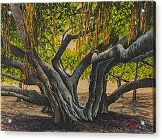 Banyan Tree Maui Acrylic Print