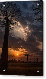 Baobab Sunrays Acrylic Print
