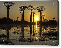 Acrylic Print featuring the photograph Baobab Sunset by Judi Baker