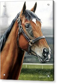 Barbaro At Churchill Downs Acrylic Print by Thomas Allen Pauly