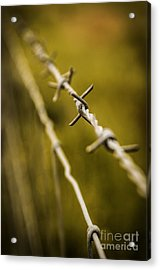 Barbed Wire Acrylic Print by Carlos Caetano