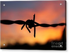 Acrylic Print featuring the photograph Barbed Silhouette by Vicki Spindler