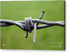 Barbed Acrylic Print