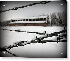 Barbed Wire Barn Acrylic Print by Krista Carofano
