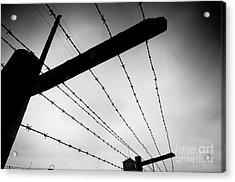 Barbed Wire Fence Acrylic Print by Michal Bednarek