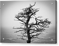 Bare Cypress Acrylic Print by Melinda Ledsome