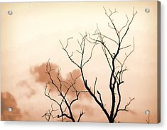 Bare Limbs Acrylic Print by Denise Romano